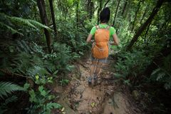 Backpacking woman hiking on trail in rainforest. Woman backpacking woman hiking on trail in rainforest stock photo
