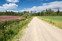 Backroad. Rough road in rural Finland in summer royalty free stock image
