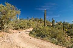 Backroad in Arizona Desert. Beautiful, peaceful, backroad in the Arizona desert with lots of cactus stock image