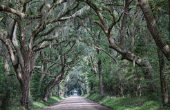 Backroad canopy Royalty Free Stock Photography