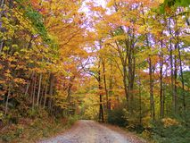 BACKROAD WITH TOWERING ORANGE FALL FOLIAGE TREES stock photography