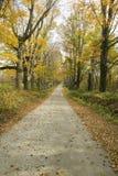 Backroads in autumn on Mohawk Trail in western Massachusetts, New England Stock Photo