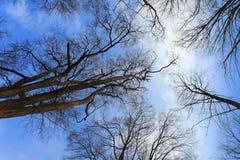 backround δέντρο Στοκ φωτογραφίες με δικαίωμα ελεύθερης χρήσης
