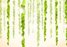 Backround abstrato com lianas Imagem de Stock