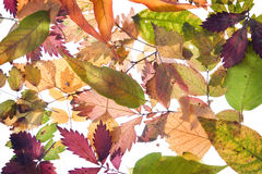 Backround from autumn leaves. Backround from fallen autumn leaves many colours Stock Photography
