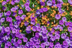 Backround av blommor Royaltyfria Foton