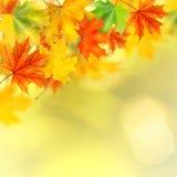 Backround con i fogli di autunno immagine stock