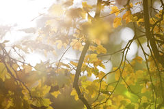 Backround d'automne avec des lames de brindille et de jaune images stock