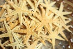 Backround de la estrella del océano imagenes de archivo