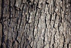 Backround de madeira da casca Foto de Stock Royalty Free