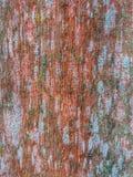 Backround de madera de la pared del granero viejo Fotos de archivo
