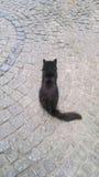 Backround dei gatti dell'animale domestico Immagini Stock Libere da Diritti