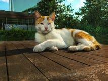Backround dei gatti dell'animale domestico Fotografie Stock Libere da Diritti