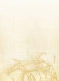 Backround del trigo Imagenes de archivo