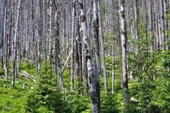 Backround del tronco de árbol Foto de archivo libre de regalías
