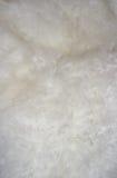 Backround della pelliccia immagine stock