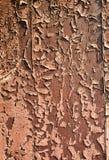 Backround di vecchia sovrapposizione riportata in scala Fotografia Stock Libera da Diritti