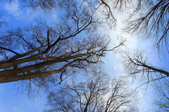 backround drzewo zdjęcia royalty free