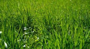 Backround för grönt gräs arkivfoton