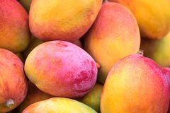 Backround of new harvest mango for sale at city market. Backround of new harvest mango for sale at city farmers market stock image