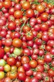 Backround organique rouge de tomates Image stock