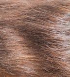 Backround orizzontale dei capelli Fotografie Stock Libere da Diritti