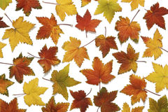 Backround pattern of autumn leaves Stock Photo