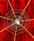 Backround with Spider and cobweb Royalty Free Stock Image