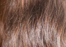 Backround vertical de cheveux Photos libres de droits