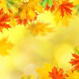 Backround With Autumn Leaves Stock Images