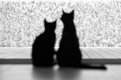 Two black cats admiring the snow. The backs of two black cats, female and male, admiring the fresh snow outside Royalty Free Stock Photos