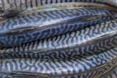 Backs of uncooked Atlantic mackerel closeup. Background of several backs of uncooked atlantic mackerel closeup royalty free stock photography