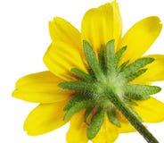 Backside flower detail Royalty Free Stock Image