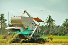 Backside of rice harvesting Stock Photos