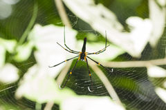 Backside spider in the center of a spider web Royalty Free Stock Images