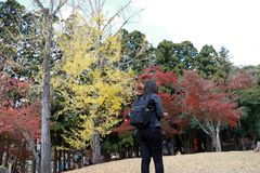 Backside of tourist girl in black dress and backpack, standing at Kasugano-enchi Park on autumn with yellow and red tree. Zoshicho, Nara, Japan, November 21 royalty free stock images