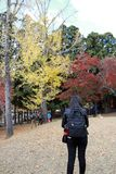 Backside of tourist girl in black dress and backpack, standing at Kasugano-enchi Park on autumn with yellow and red tree. Zoshicho, Nara, Japan, November 21 royalty free stock photography