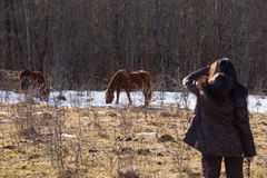 Backside view young brunette woman looks at wild horses that graze in clearing with snow in mountains near forest stock image