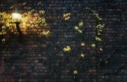 Backsteinmauer mit Anlage und Lampe auf ihr Stockfotografie