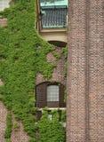 Backsteinmauer mit europäischem Efeu Stockfotografie