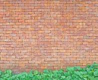 Backsteinmauer mit grünem Blatt Stockfoto