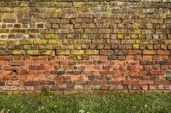 Backsteinmauer mit Gras und Gänseblümchen Stockbild
