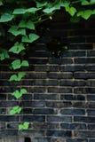 Backsteinmauer mit Reben Lizenzfreie Stockfotos