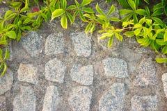 Backsteinmauer oder Zaun mit wilden Trauben filter Stockbild