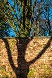 Backsteinmauer-und Baum-Hintergrund-Beschaffenheit Stockbilder