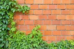 Backsteinmauer und Efeu Lizenzfreie Stockfotos
