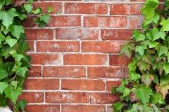 Backsteinmauer und Efeu Stockfotografie