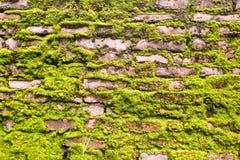 Backsteinmauer voll mit grünem Moos Lizenzfreies Stockbild