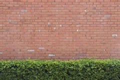 Backsteinmauerbeschaffenheitshintergrund mit grünem Busch Lizenzfreie Stockbilder