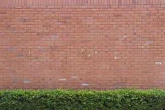 Backsteinmauerbeschaffenheitshintergrund mit grünem Busch Stockfoto